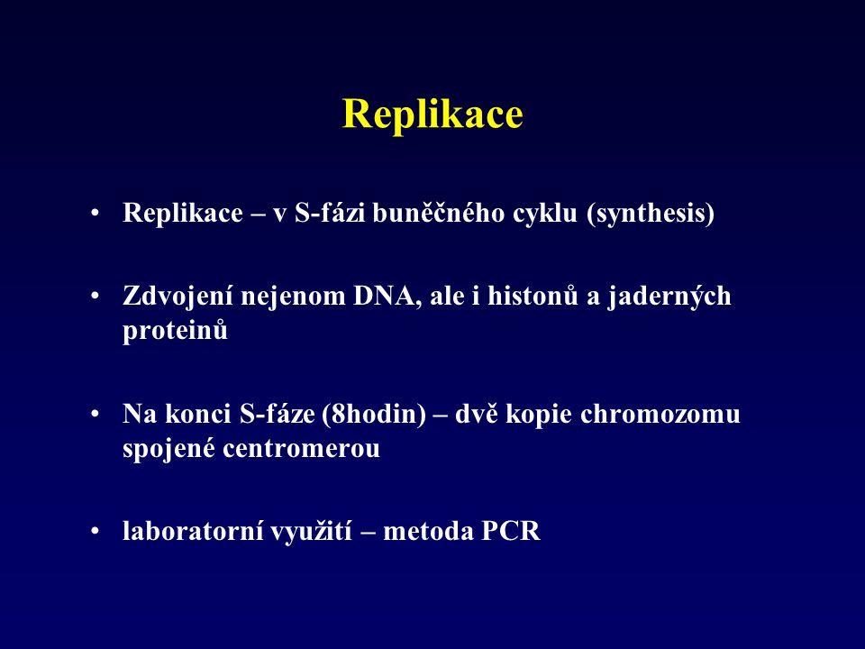 Replikace Replikace – v S-fázi buněčného cyklu (synthesis)