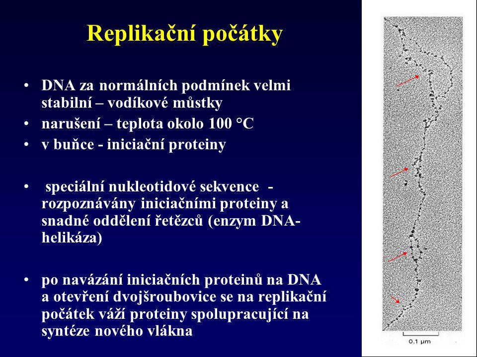 Replikační počátky DNA za normálních podmínek velmi stabilní – vodíkové můstky. narušení – teplota okolo 100 °C.