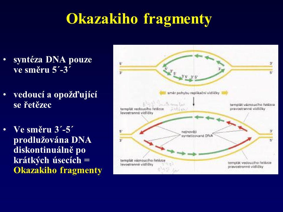 Okazakiho fragmenty syntéza DNA pouze ve směru 5´-3´
