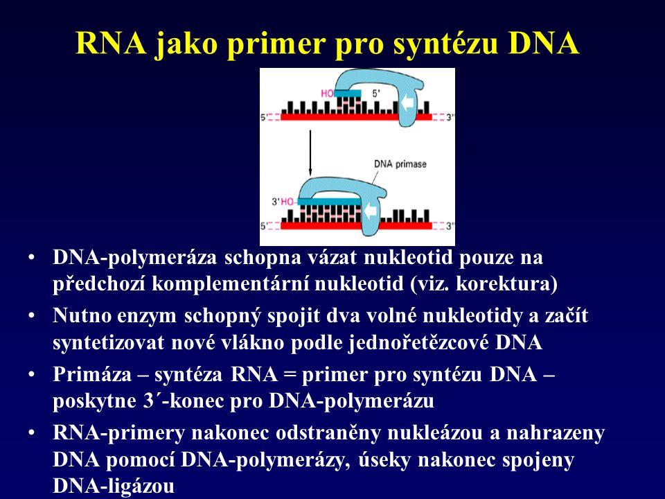 RNA jako primer pro syntézu DNA
