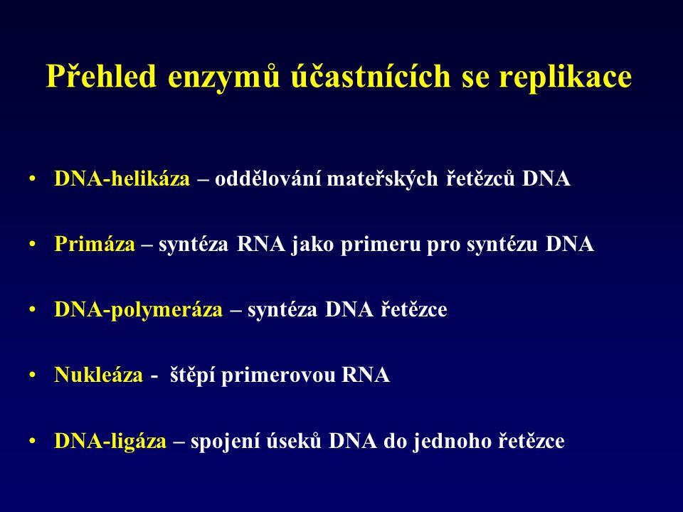 Přehled enzymů účastnících se replikace