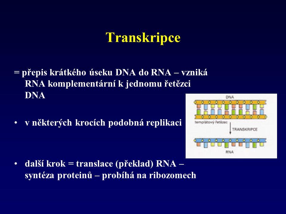 Transkripce = přepis krátkého úseku DNA do RNA – vzniká RNA komplementární k jednomu řetězci DNA. v některých krocích podobná replikaci.
