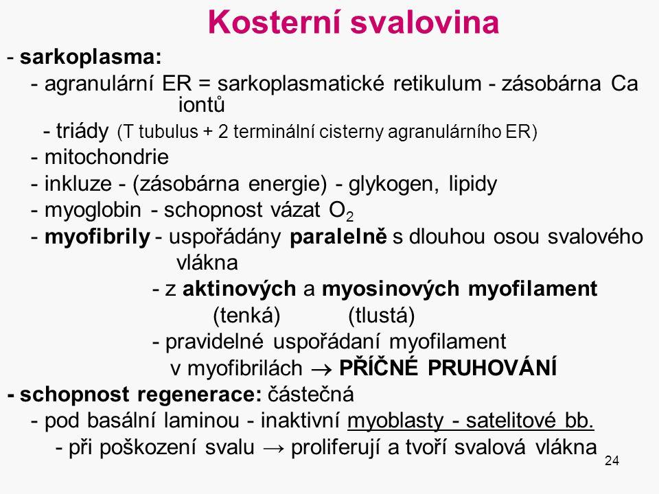 Kosterní svalovina - sarkoplasma:
