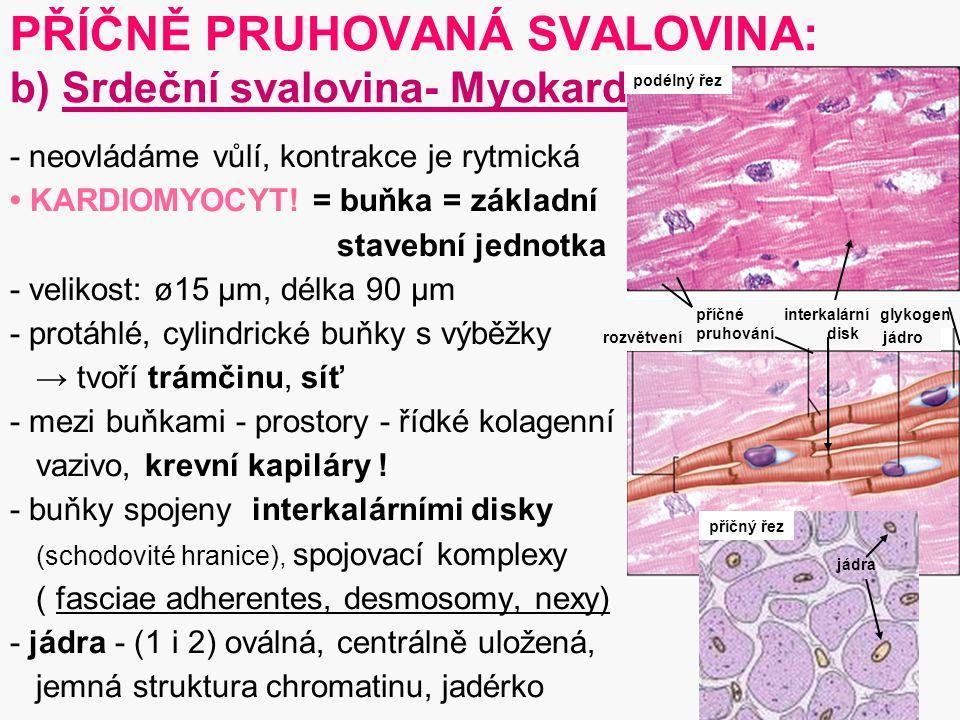 PŘÍČNĚ PRUHOVANÁ SVALOVINA: b) Srdeční svalovina- Myokard
