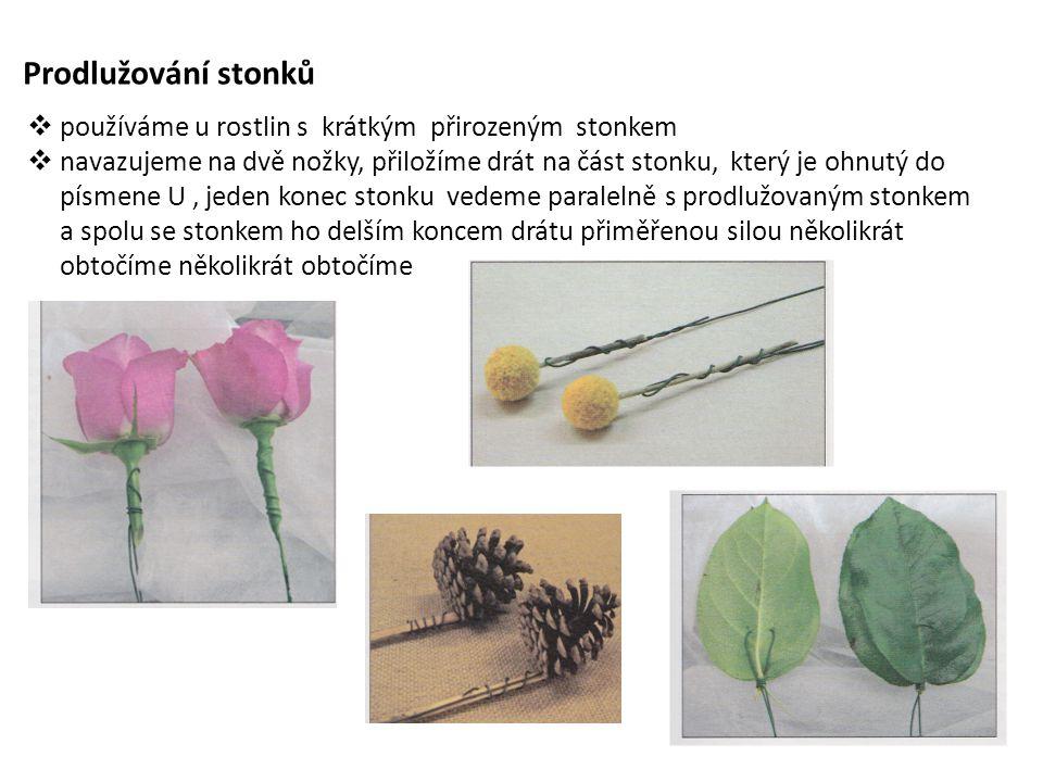 Prodlužování stonků používáme u rostlin s krátkým přirozeným stonkem