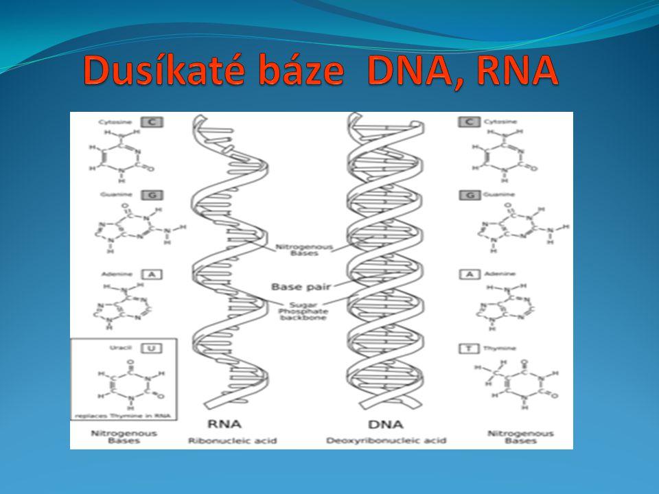 Dusíkaté báze DNA, RNA