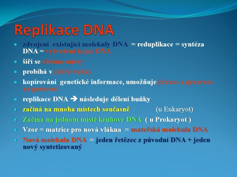 Replikace DNA zdvojení existující molekuly DNA = reduplikace = syntéza DNA = vytvoření kopie DNA.