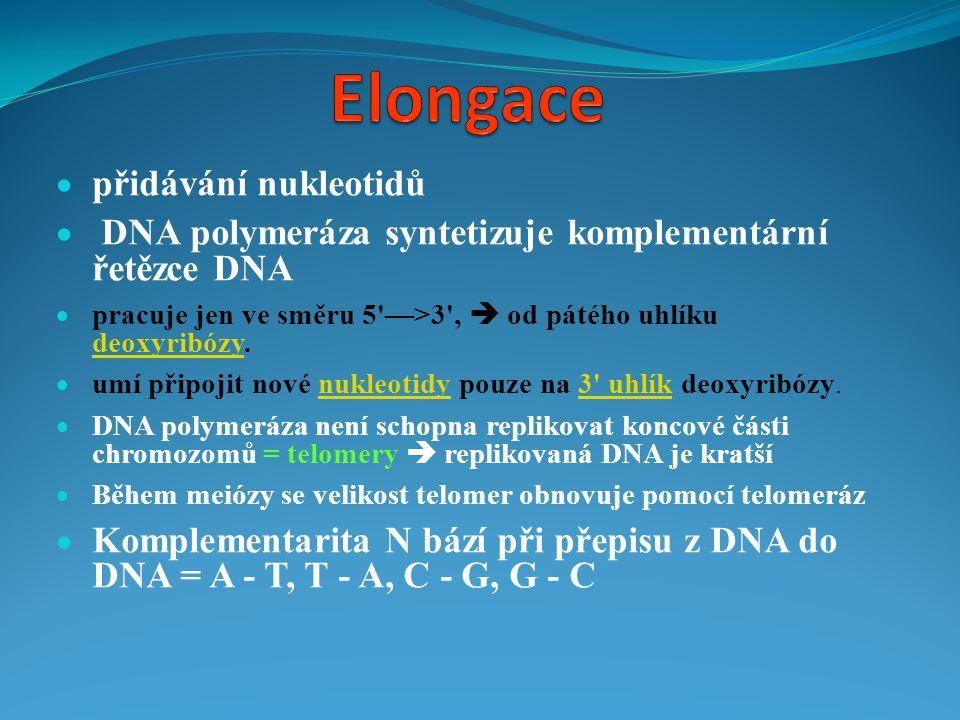 Elongace přidávání nukleotidů