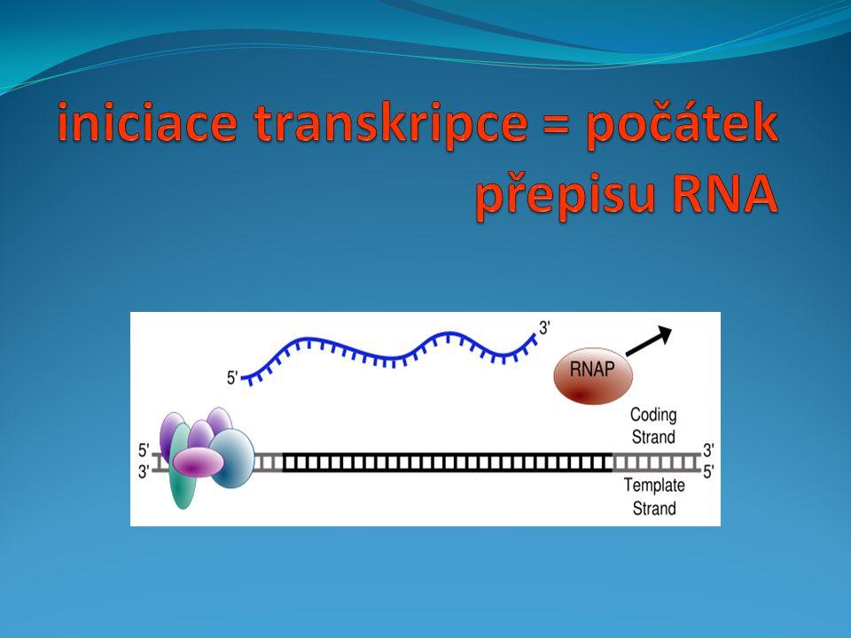 iniciace transkripce = počátek přepisu RNA