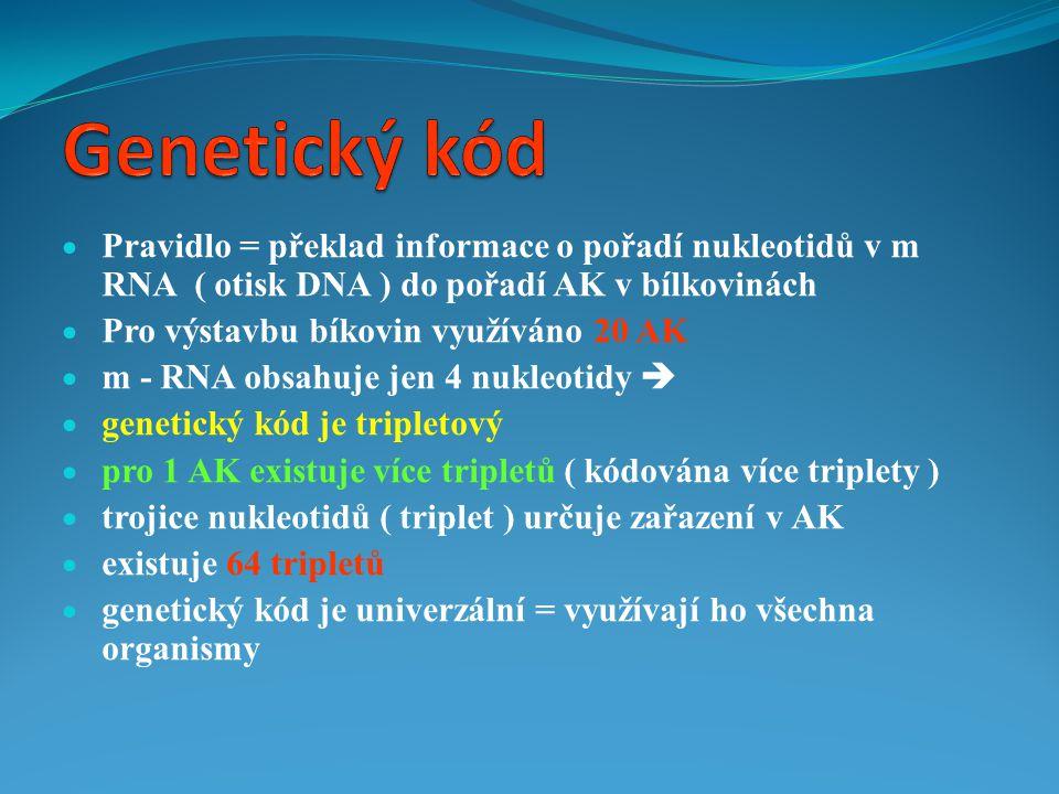 Genetický kód Pravidlo = překlad informace o pořadí nukleotidů v m RNA ( otisk DNA ) do pořadí AK v bílkovinách.
