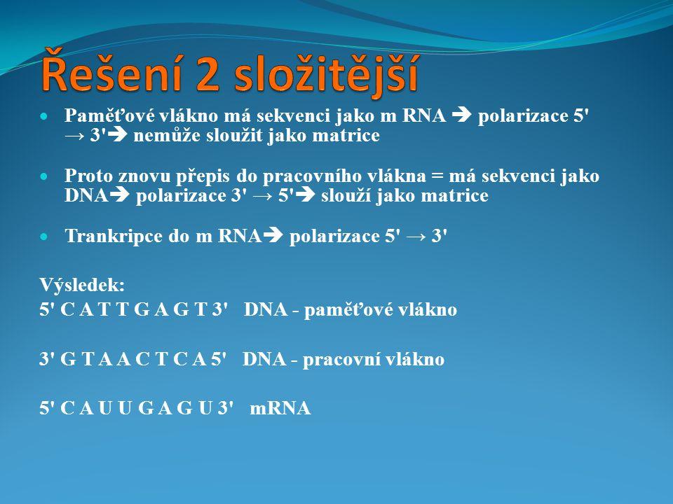 Řešení 2 složitější Paměťové vlákno má sekvenci jako m RNA  polarizace 5 → 3  nemůže sloužit jako matrice.