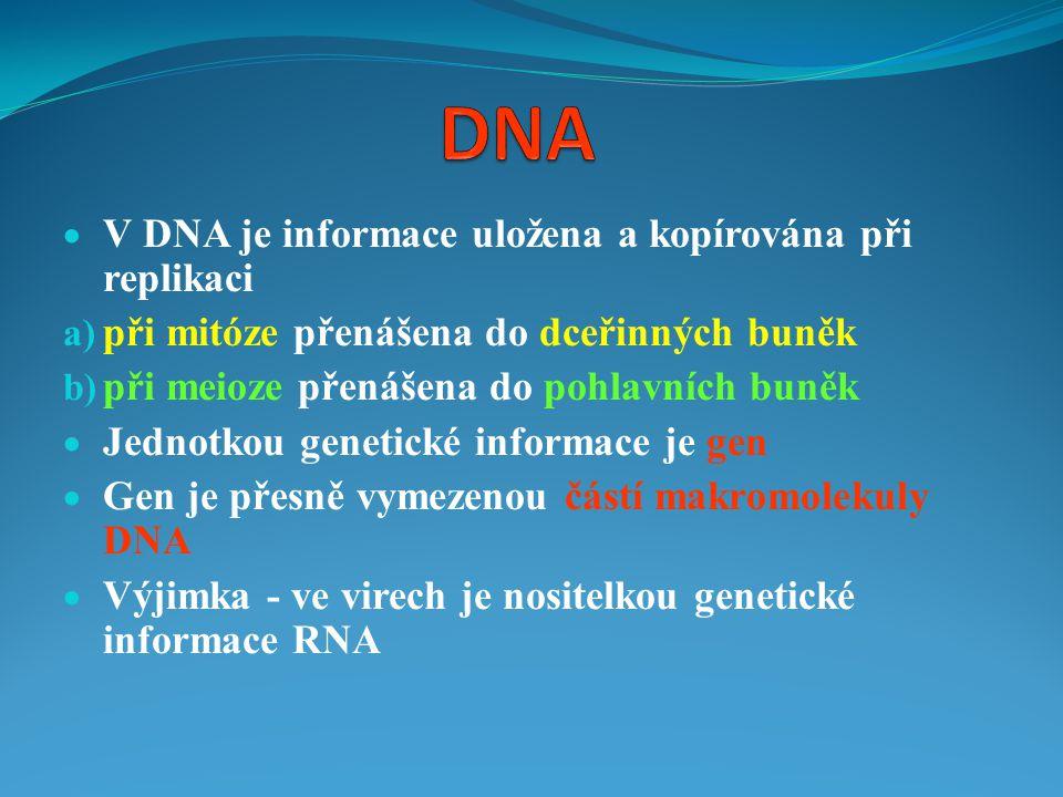 DNA V DNA je informace uložena a kopírována při replikaci