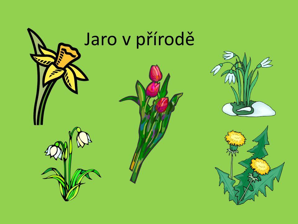 Jaro v přírodě