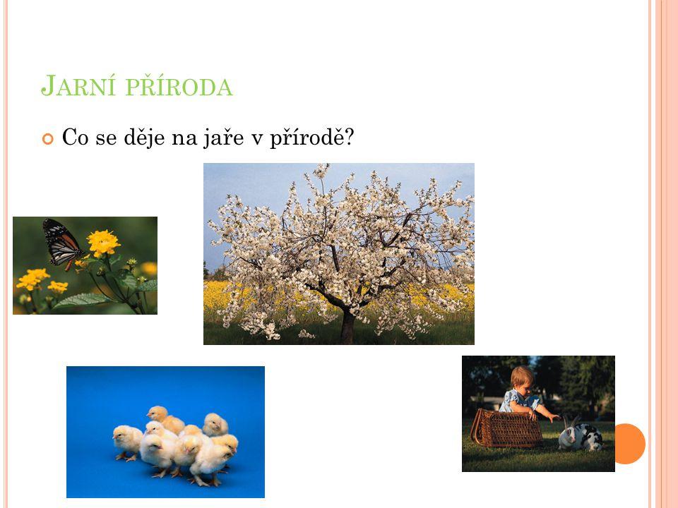 Jarní příroda Co se děje na jaře v přírodě