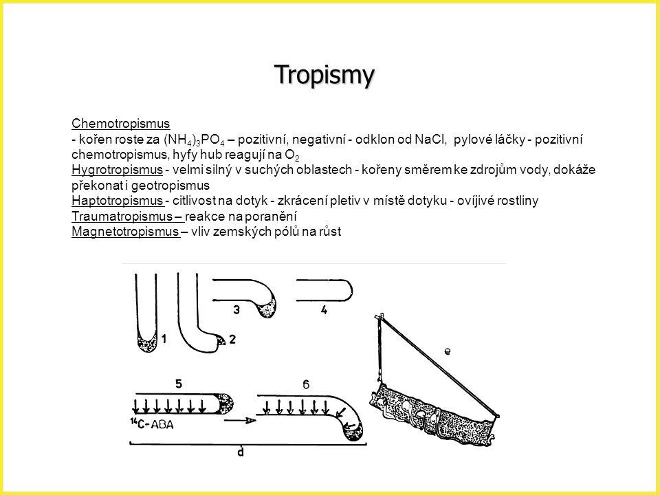 Tropismy Chemotropismus