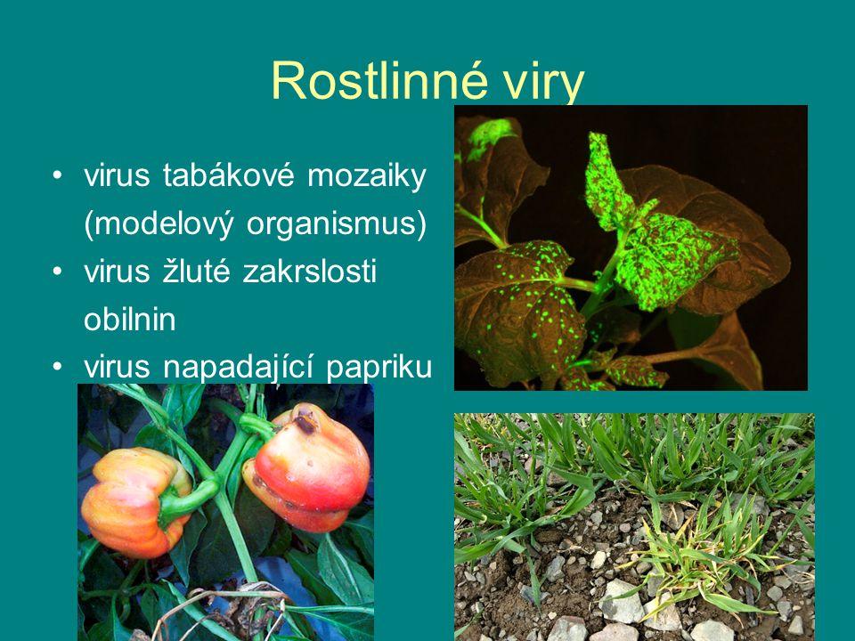 Rostlinné viry virus tabákové mozaiky (modelový organismus)