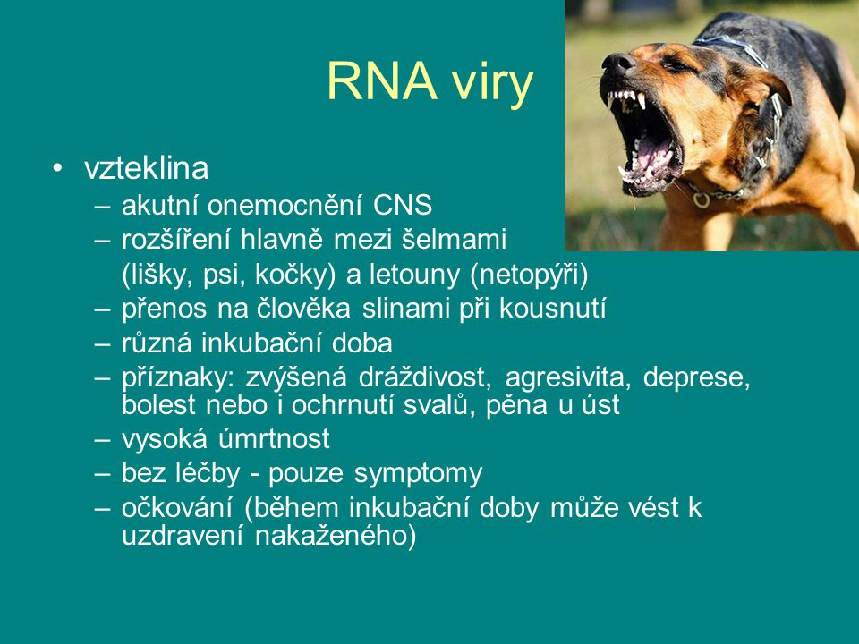 RNA viry vzteklina akutní onemocnění CNS rozšíření hlavně mezi šelmami