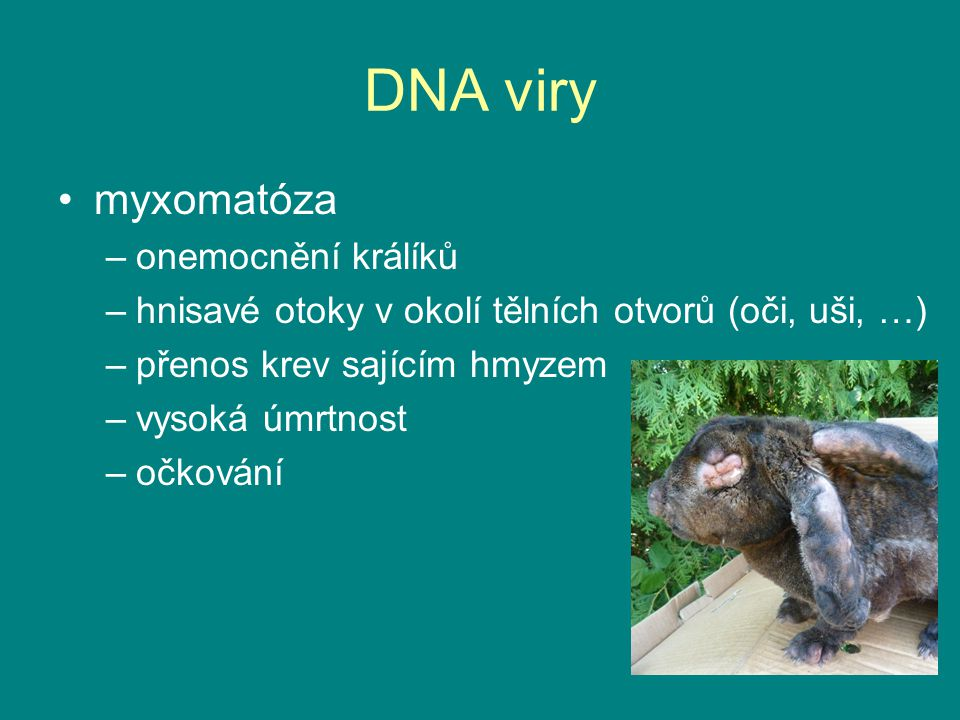 DNA viry myxomatóza onemocnění králíků