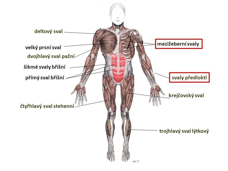 čtyřhlavý sval stehenní