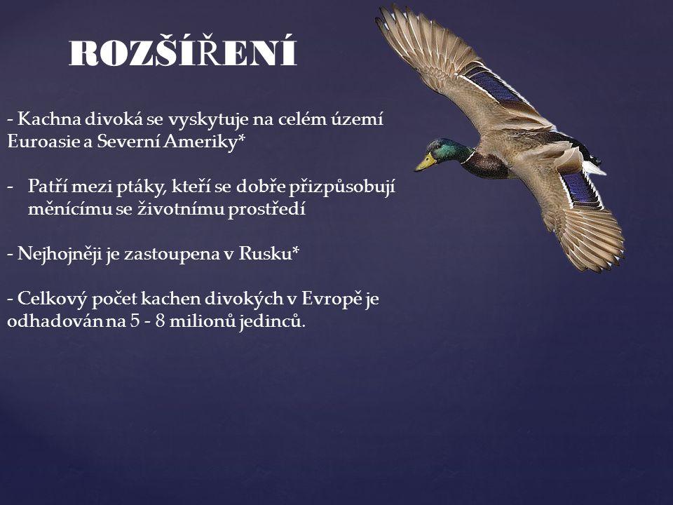ROZŠÍŘENÍ - Kachna divoká se vyskytuje na celém území Euroasie a Severní Ameriky*