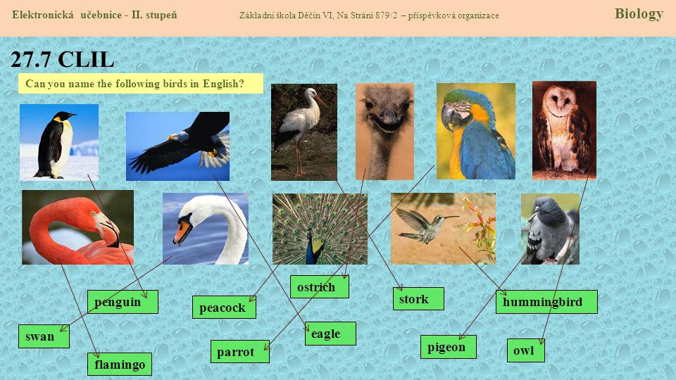 27.7 CLIL ostrich penguin stork hummingbird peacock swan eagle pigeon