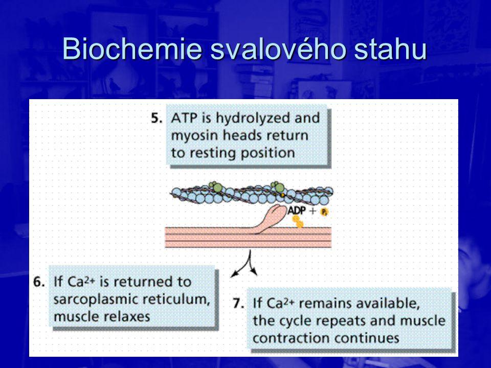 Biochemie svalového stahu