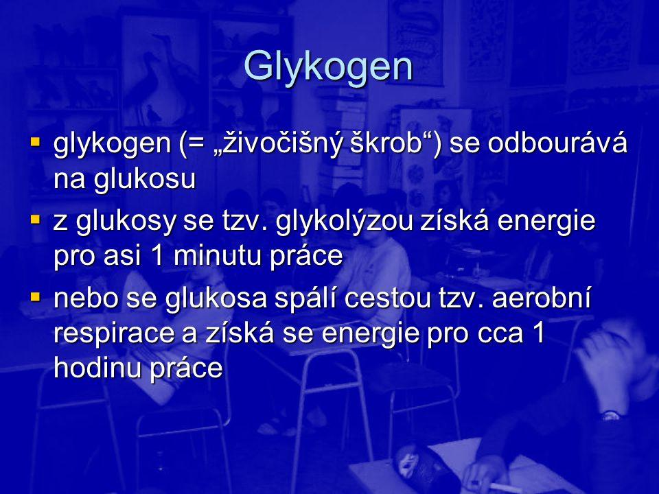 """Glykogen glykogen (= """"živočišný škrob ) se odbourává na glukosu"""