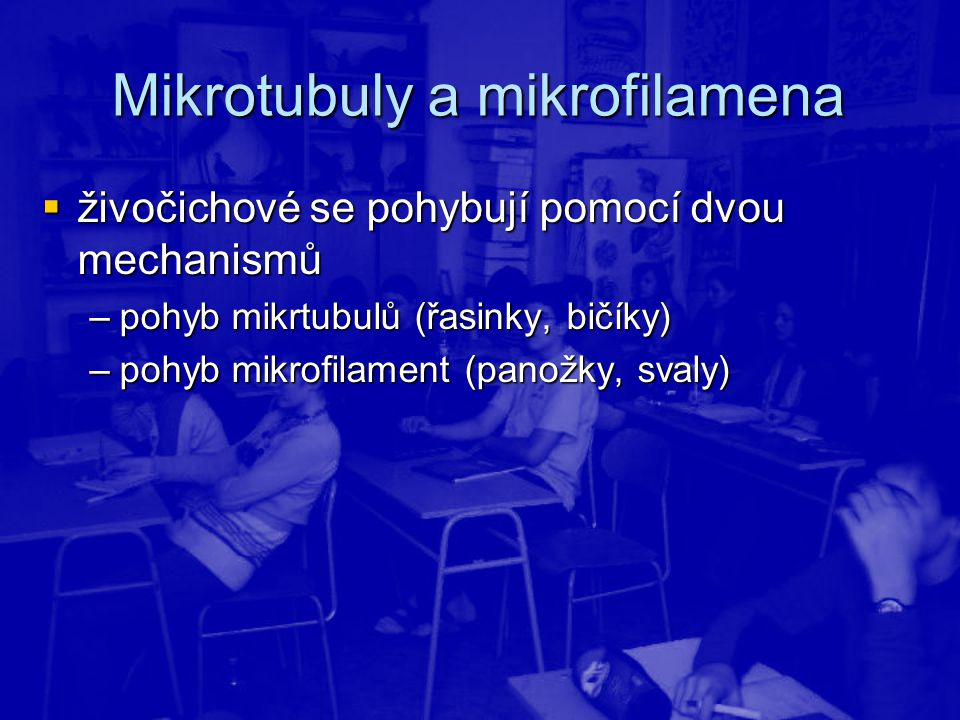 Mikrotubuly a mikrofilamena