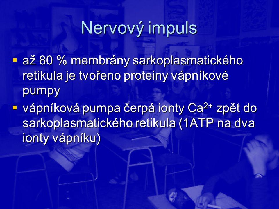 Nervový impuls až 80 % membrány sarkoplasmatického retikula je tvořeno proteiny vápníkové pumpy.