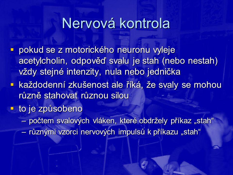 Nervová kontrola pokud se z motorického neuronu vyleje acetylcholin, odpověď svalu je stah (nebo nestah) vždy stejné intenzity, nula nebo jednička.