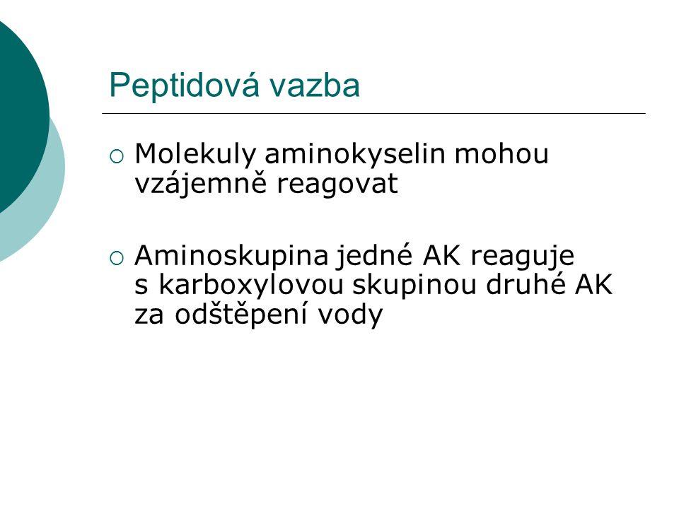 Peptidová vazba Molekuly aminokyselin mohou vzájemně reagovat