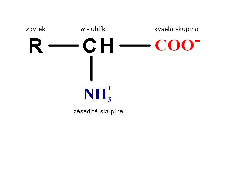 zbytek kyselá skupina a - uhlík zásaditá skupina