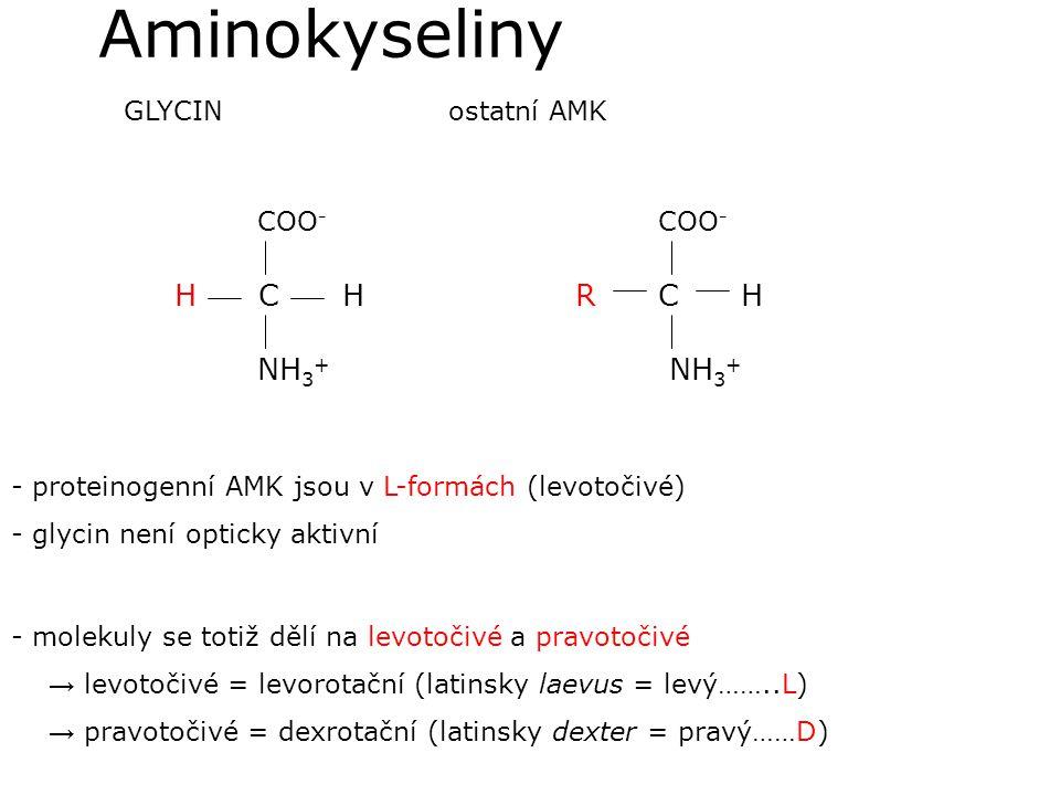 Aminokyseliny COO- H C H NH3+ COO- R C H NH3+ GLYCIN ostatní AMK