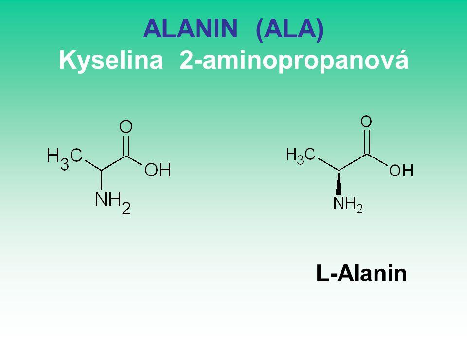 ALANIN (ALA) Kyselina 2-aminopropanová