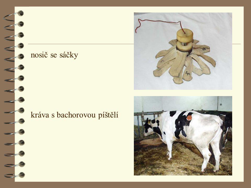 nosič se sáčky kráva s bachorovou píštělí