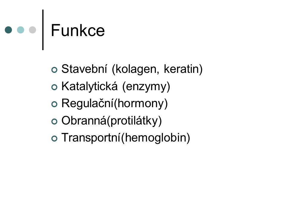 Funkce Stavební (kolagen, keratin) Katalytická (enzymy)