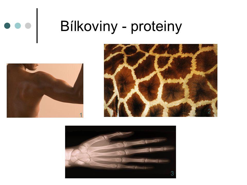 Bílkoviny - proteiny 2 1 3
