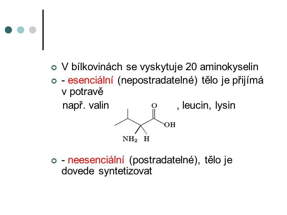 V bílkovinách se vyskytuje 20 aminokyselin
