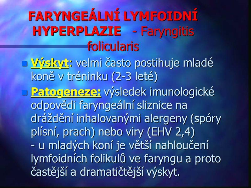 FARYNGEÁLNÍ LYMFOIDNÍ HYPERPLAZIE - Faryngitis folicularis