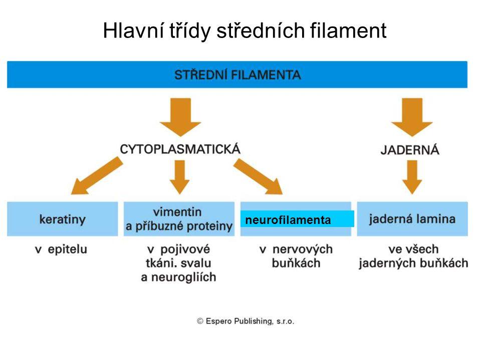 Hlavní třídy středních filament