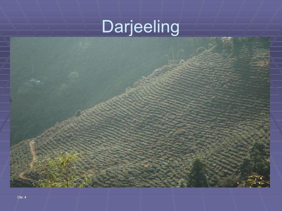 Darjeeling Obr. 4