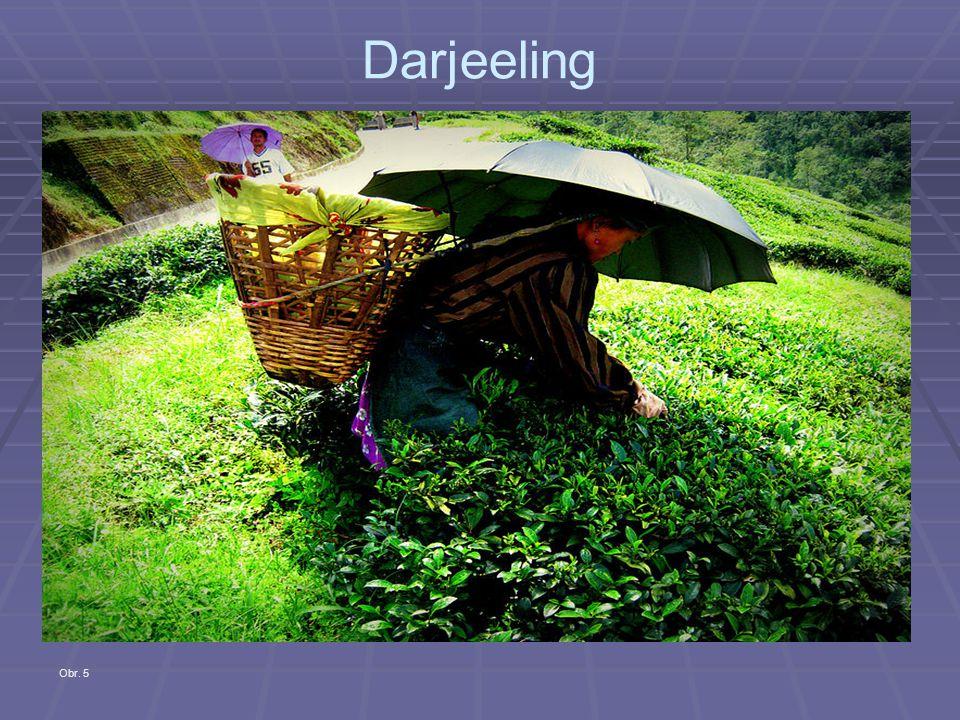Darjeeling Obr. 5