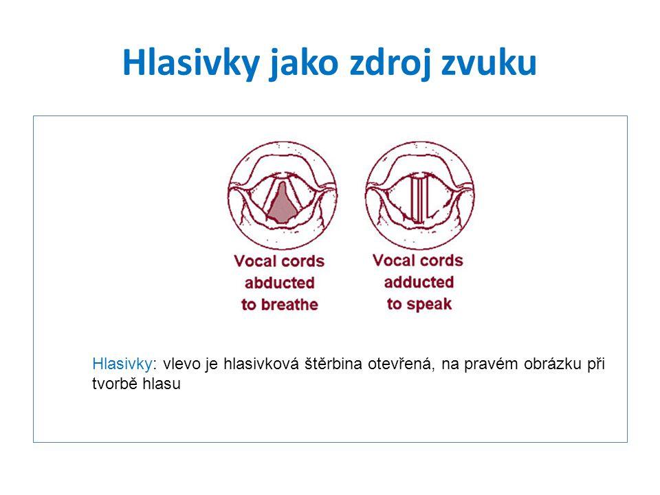 Hlasivky jako zdroj zvuku