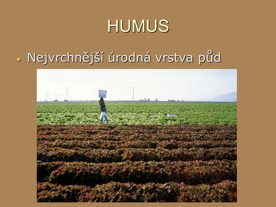 HUMUS Nejvrchnější úrodná vrstva půd
