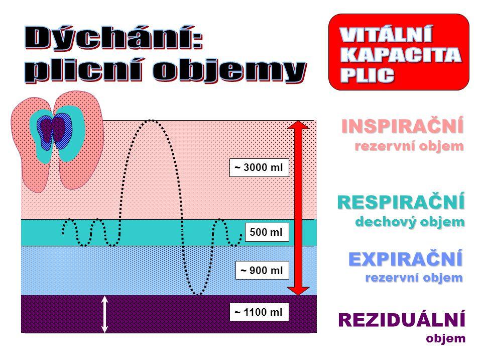 VITÁLNÍ KAPACITA PLIC Dýchání: plicní objemy INSPIRAČNÍ RESPIRAČNÍ