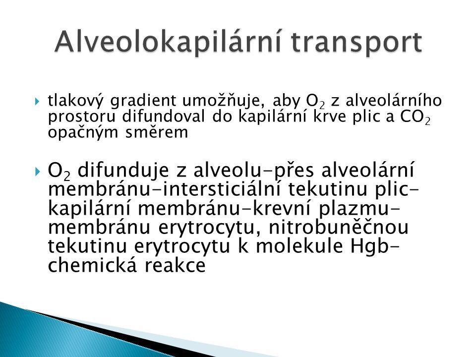 Alveolokapilární transport