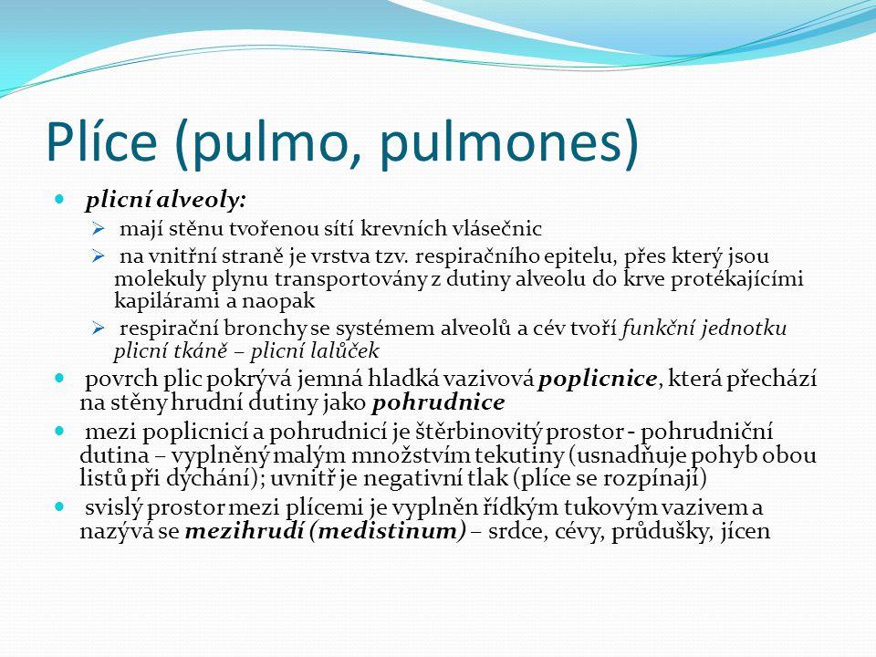 Plíce (pulmo, pulmones)