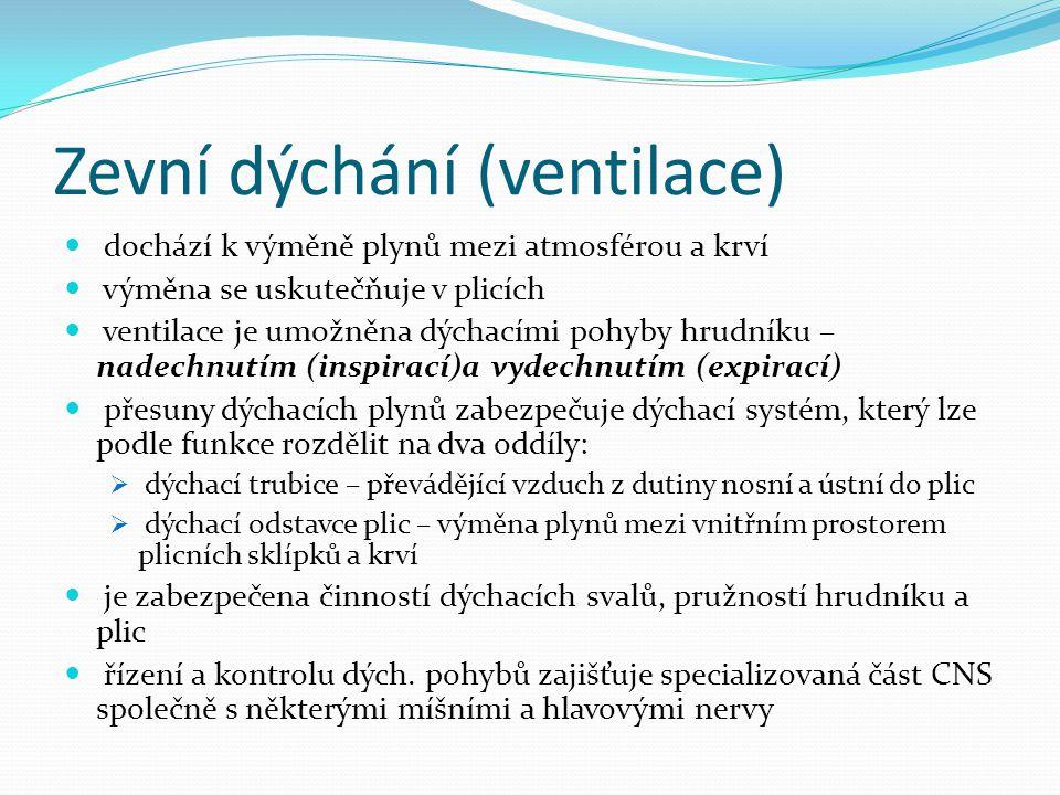 Zevní dýchání (ventilace)
