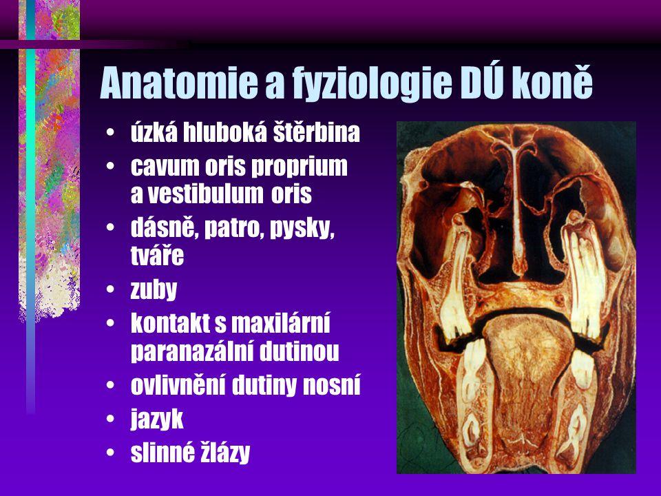 Anatomie a fyziologie DÚ koně