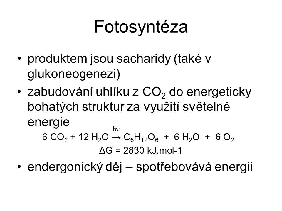 Fotosyntéza produktem jsou sacharidy (také v glukoneogenezi)